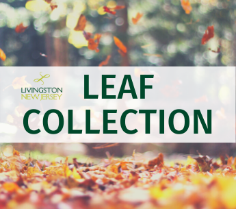 Photo of leaves falling and covering the ground in autumn. Livingston logo + text: Leaf Collection
