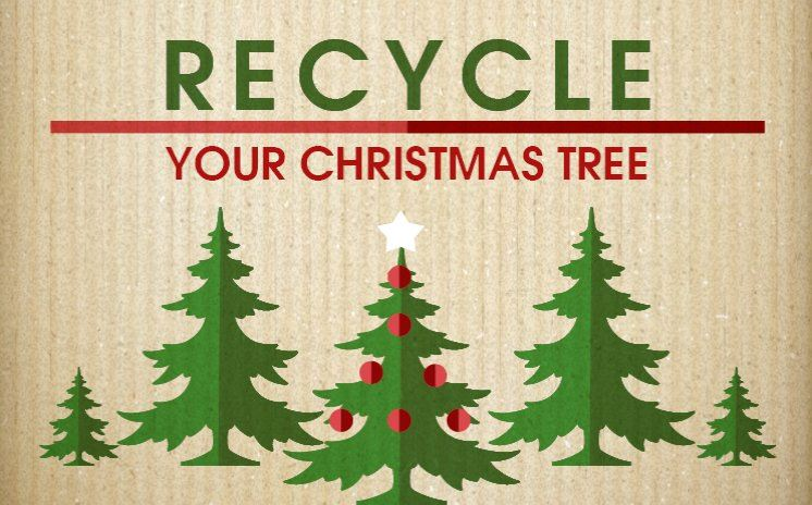 Recycle Your Christmas Tree - on cardboard background with trees