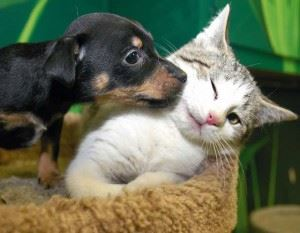 Dog and Cat Up for Adoption