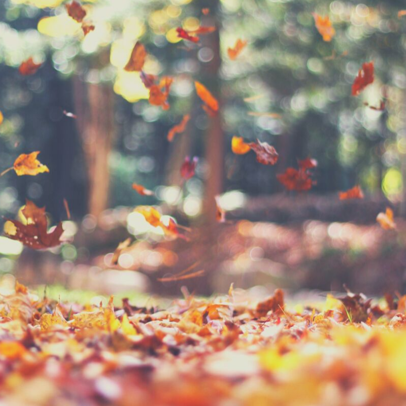 Photo of colorful leaves falling and more leaves piled on ground, with out-of-focus trees in the bac