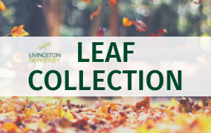 Livingston logo + LEAF COLLECTION over photo of leaves falling, pile of colorful leaves on ground, a